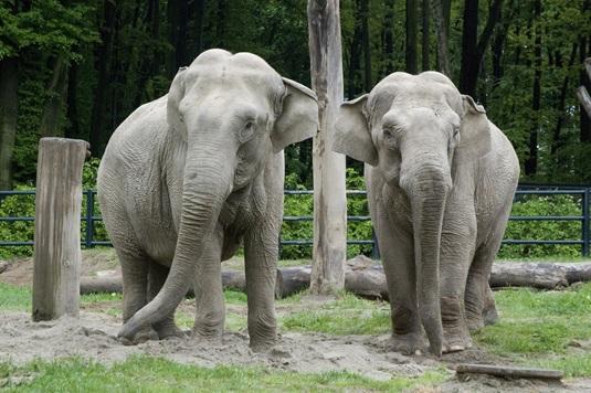 Wkraczamy na nowy poziom obdarowywania… adoptując słonicę
